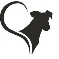 Danilo Monverde Dog Trainer